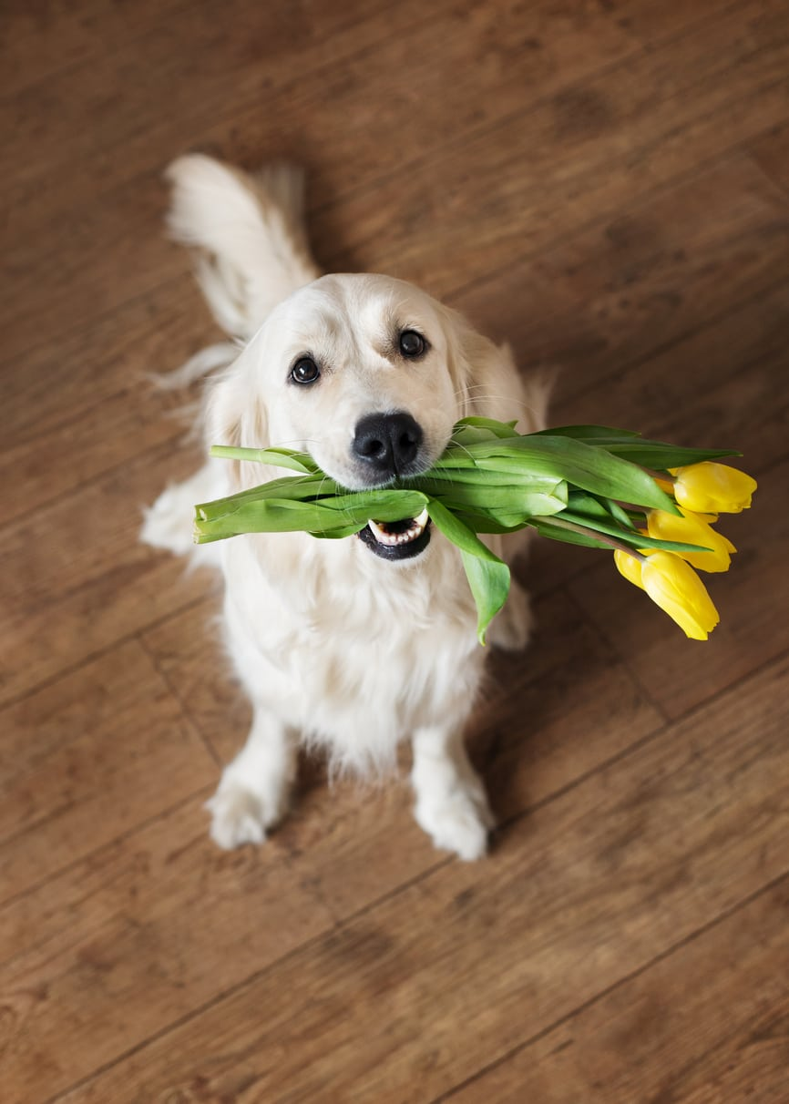 golden retriever with flowers in mouth: New Client Form in North Charleston