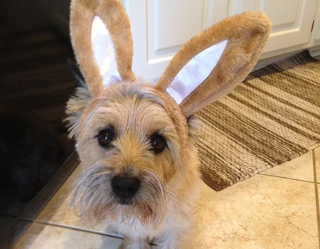 small dog with bunny ears